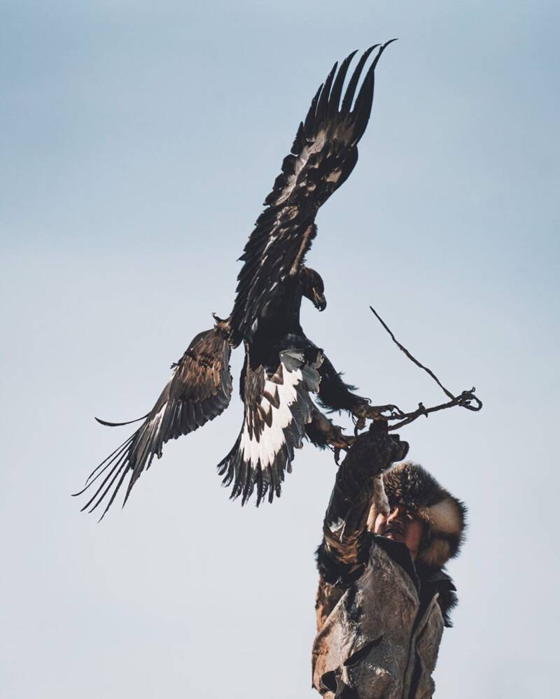Mongolian Eagle Flying