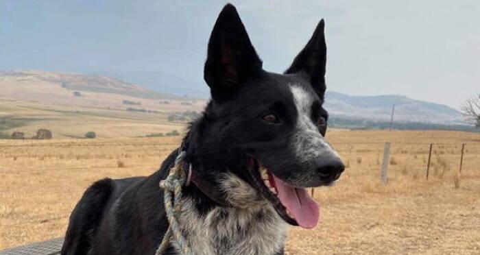 patsy-the-wonder-dog-outdoors.jpg