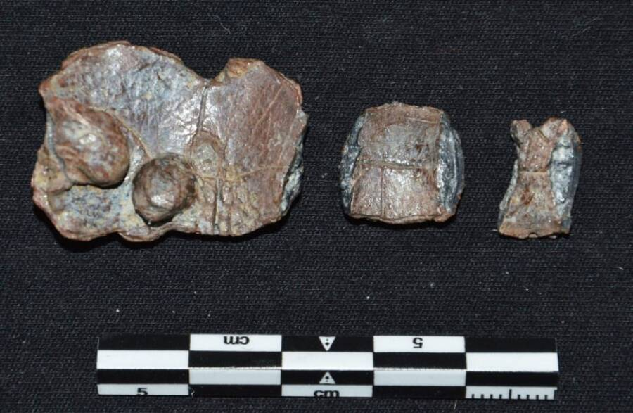 Ancient Greek Curse Tablets