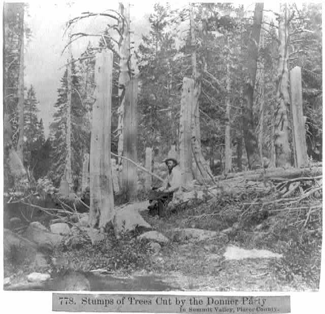 Donner Party Trees