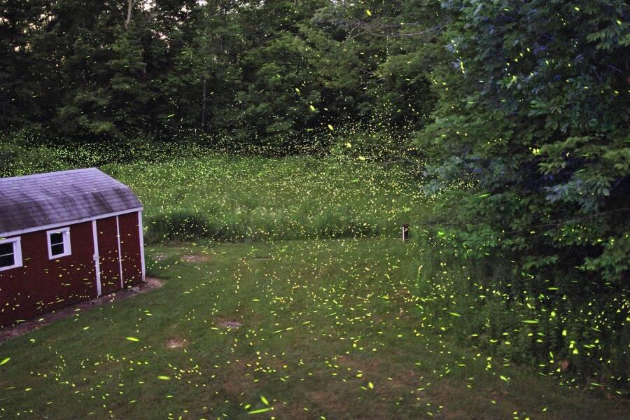 Fireflies In The Backyard