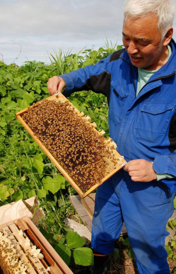 Matsumura With Bees