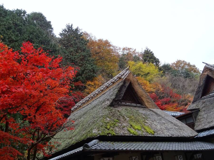 Autumn Trees Over Temple