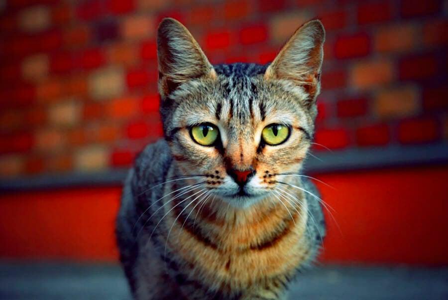 Cat By Brick Wall