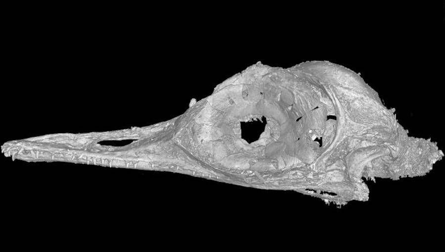 Cat Scan Of The Oculudentavis Khaungraae