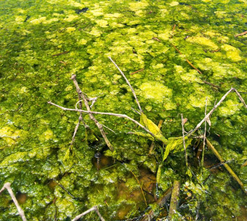 Dead Zone For Algae