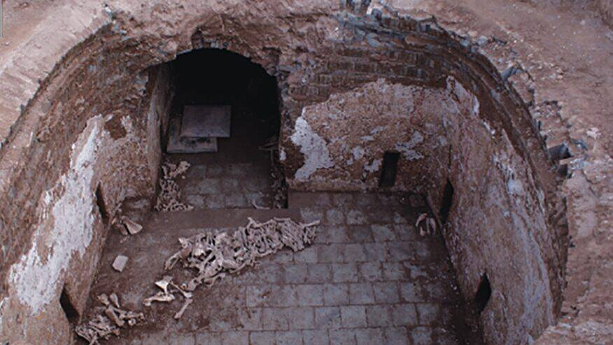 Donkey Skeleton In The Tomb Of Chu Shi