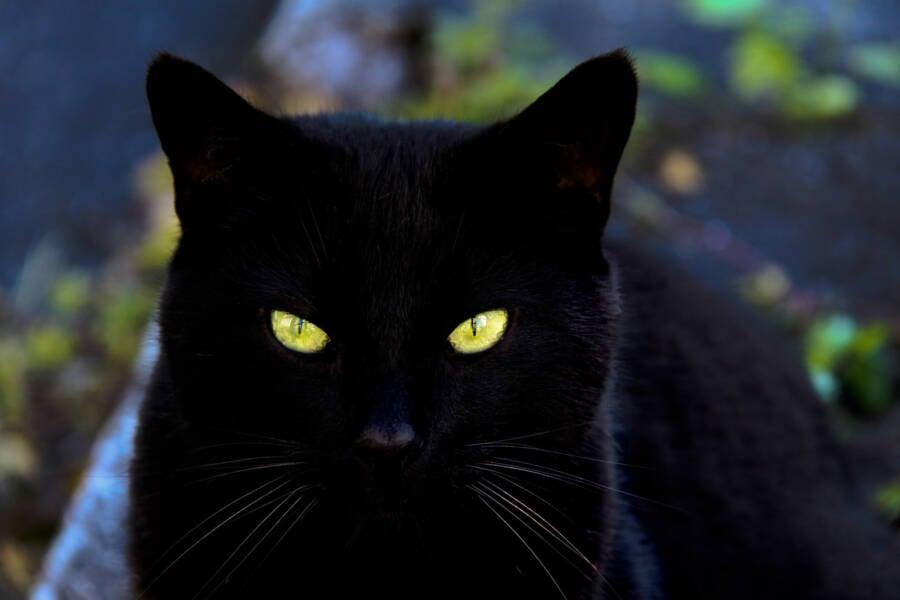 Glowing Cat Eyes