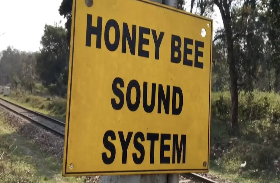Honey Bee Sound System Warning Sign