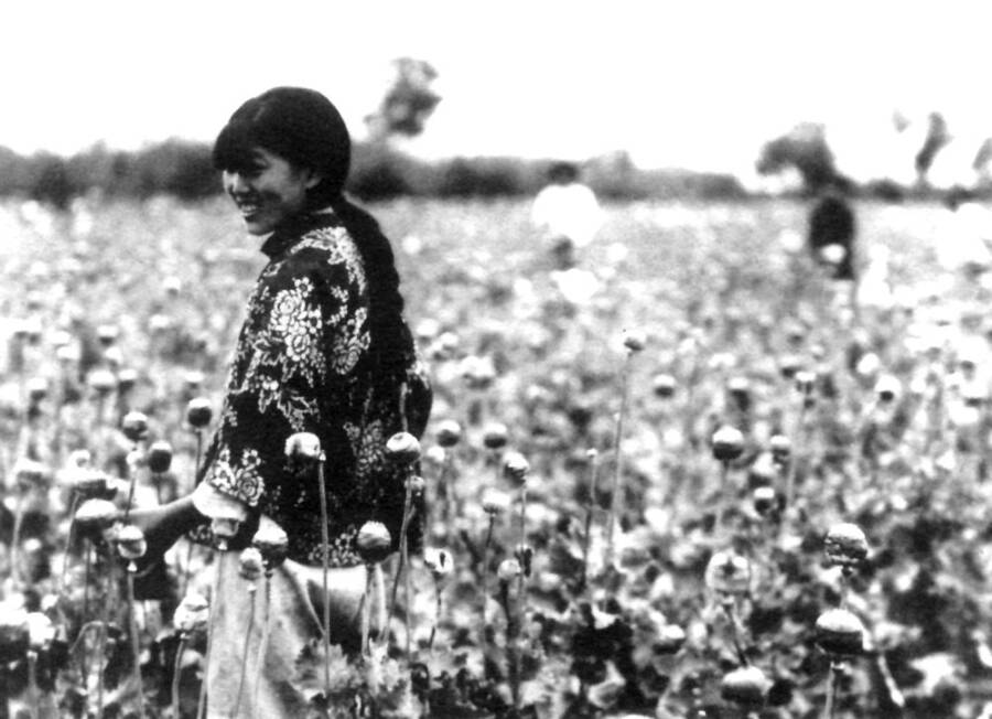 Woman Harvesting Poppy