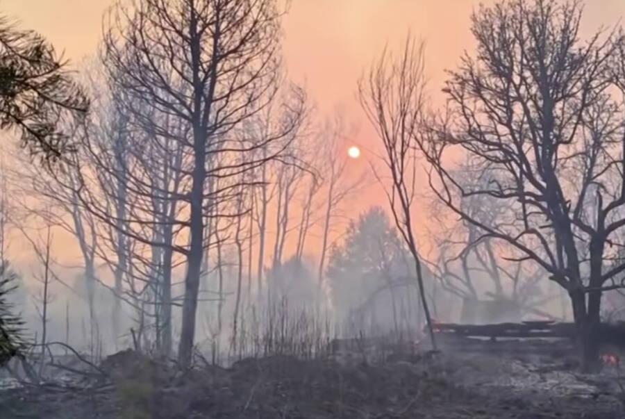 Chernobyl Forest Fires In Vladimirovka
