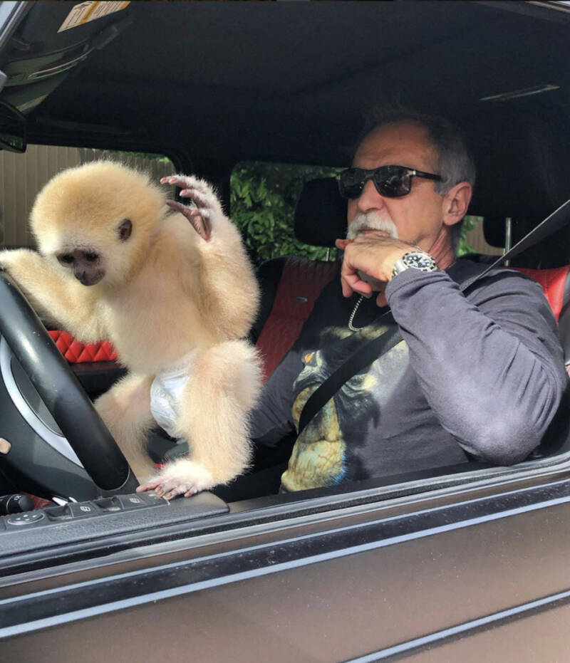 Mario Tabraue Driving With A Monkey