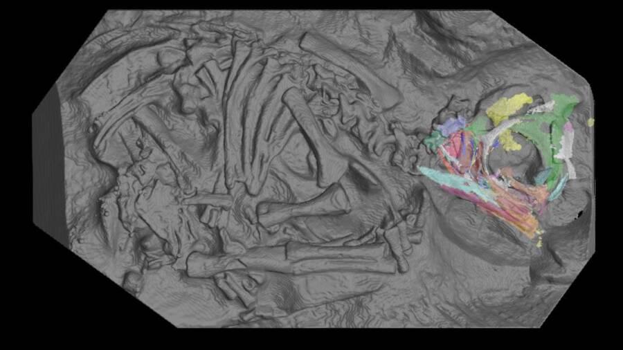 Massospondylus Carinatus Synchrotron Scan