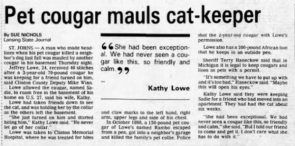 News Clipping Of Jeff Lowe Cougar Incident