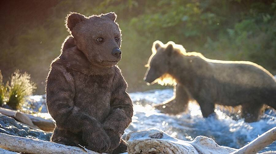 Robotic Bear And Grizzly Bear
