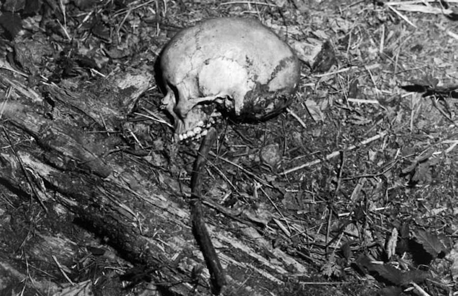Skull Of Ted Bundy Victim Denise Naslund