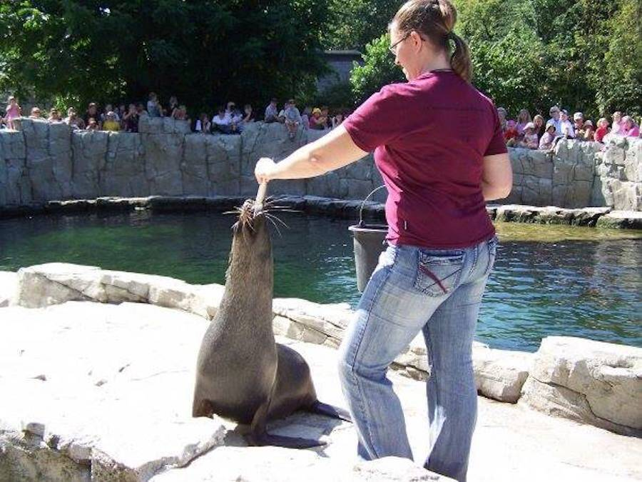 Verena Kaspari Feeding A Sea Lion