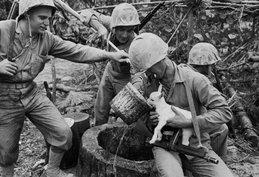 Army Goat Drinks