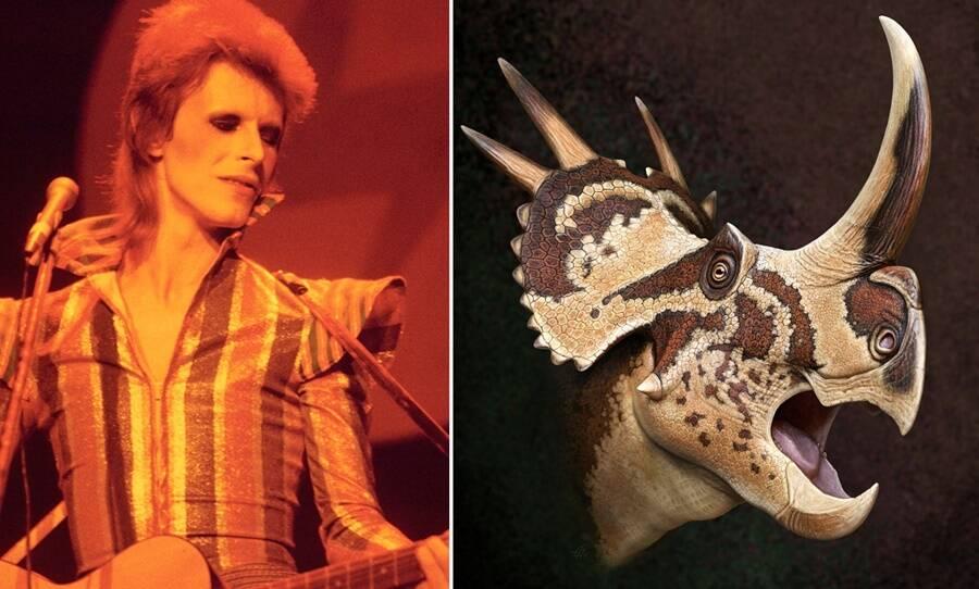 Bowie Dinosaur
