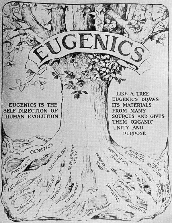 Illustration Of A Eugenics Tree
