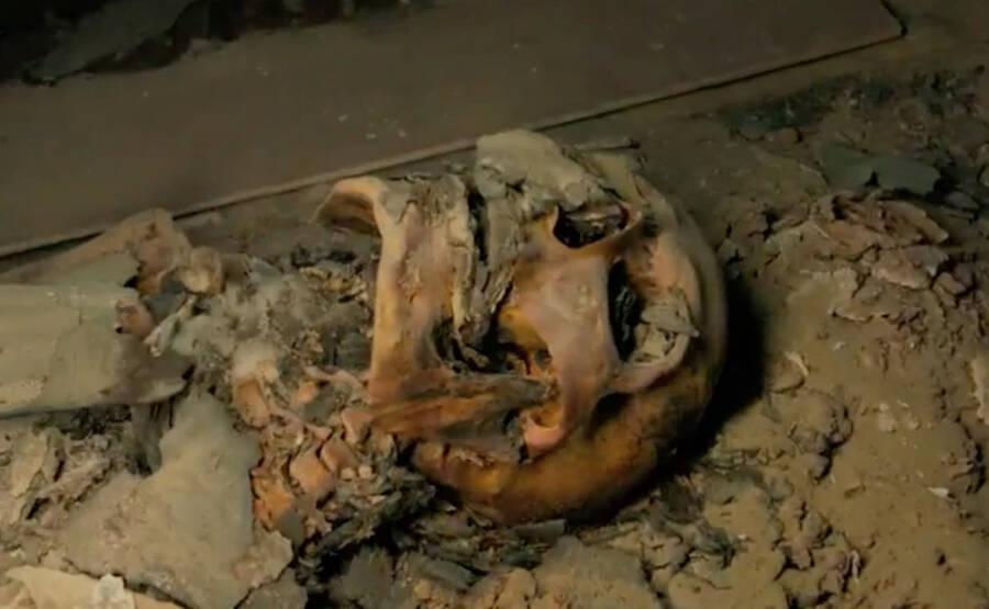 Mummy In Saqqara
