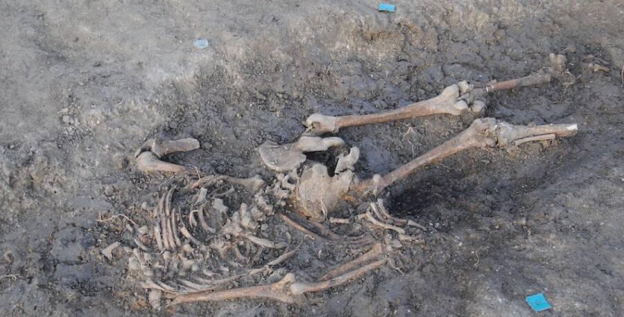 Skeleton Found In Timisoara Mass Grave