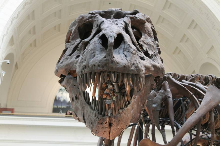 Skull And Skeleton Of Tyrannosaurus Rex