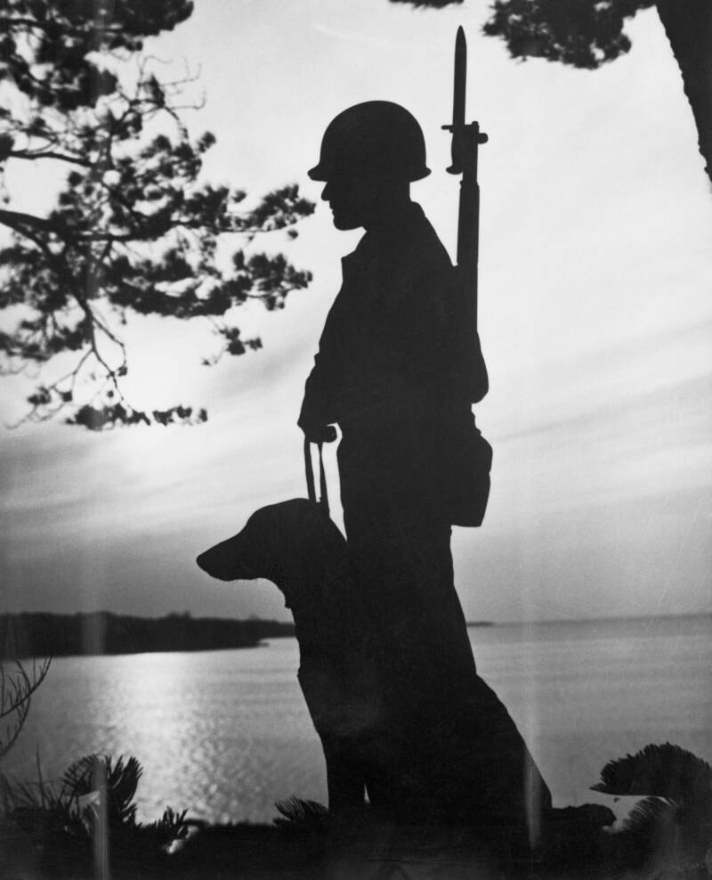 Soldier Dog Silhouette