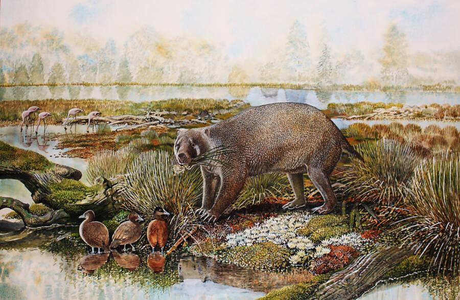 Mukupirna Illustration