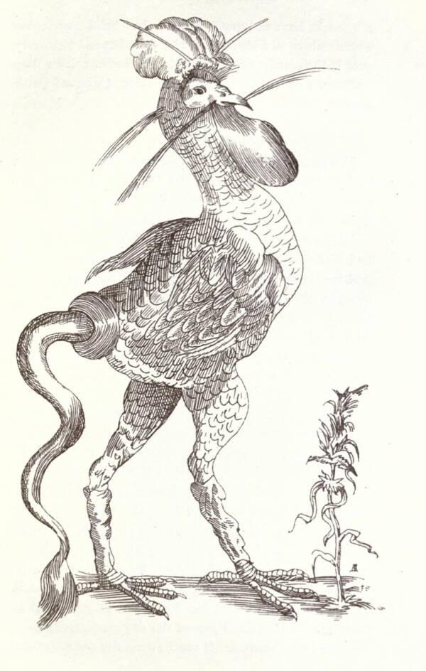 Sketch Of A Strange Bird