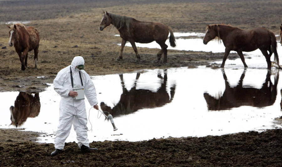 Wild Horses Of Chernobyl