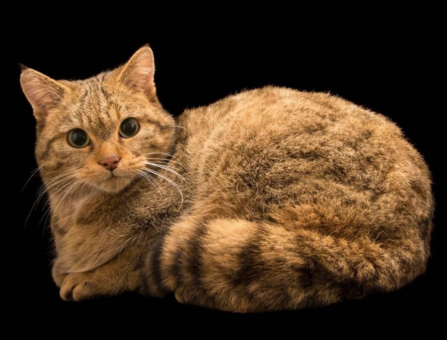 Feline Reconstruction