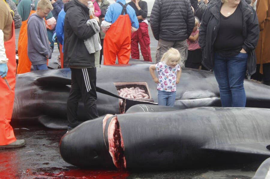 Slaughtered Whales