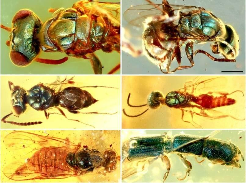 Vibrant Prehistoric Amber Bugs