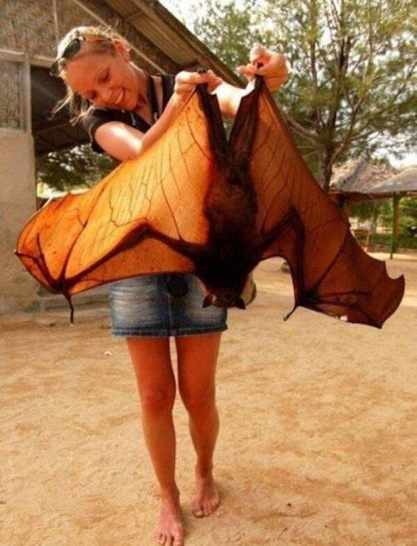 Woman With Giant Golden Crowned Flying Fox