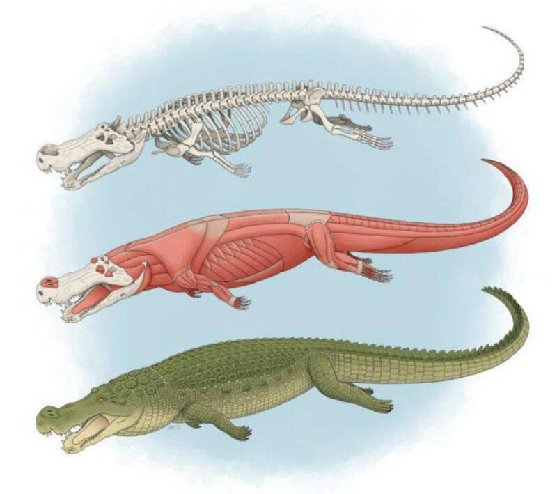 Deinosuchus Illustration