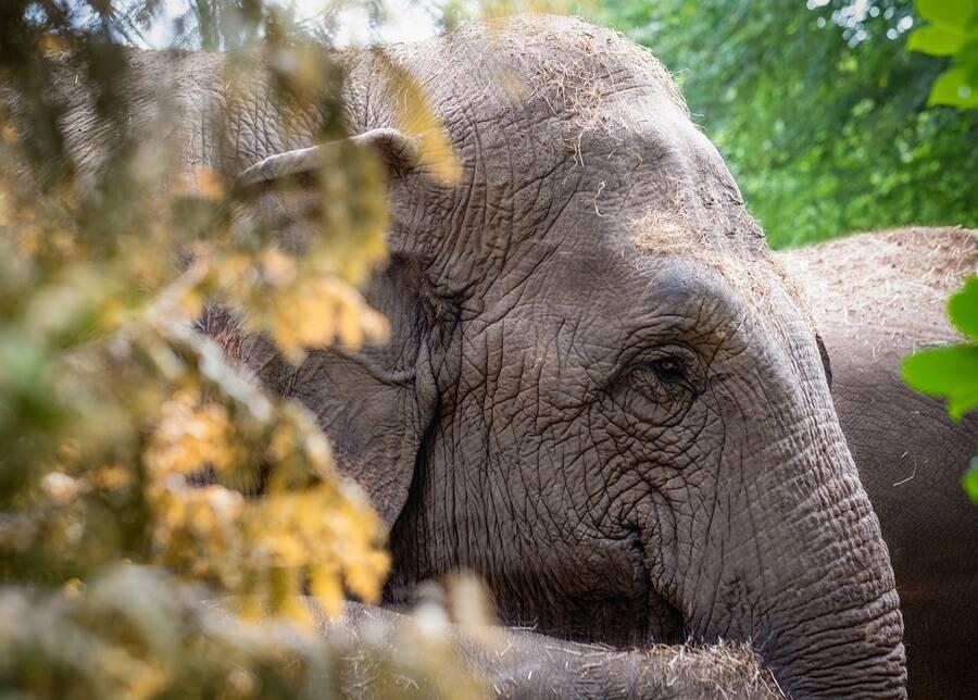 Elephant Behind Trees