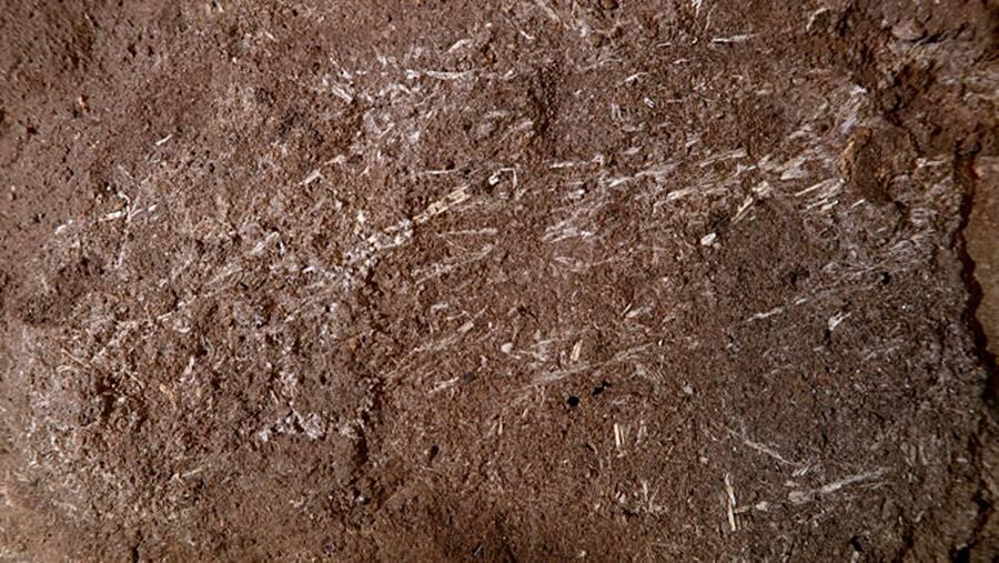 Prehistoric Grass Bedding