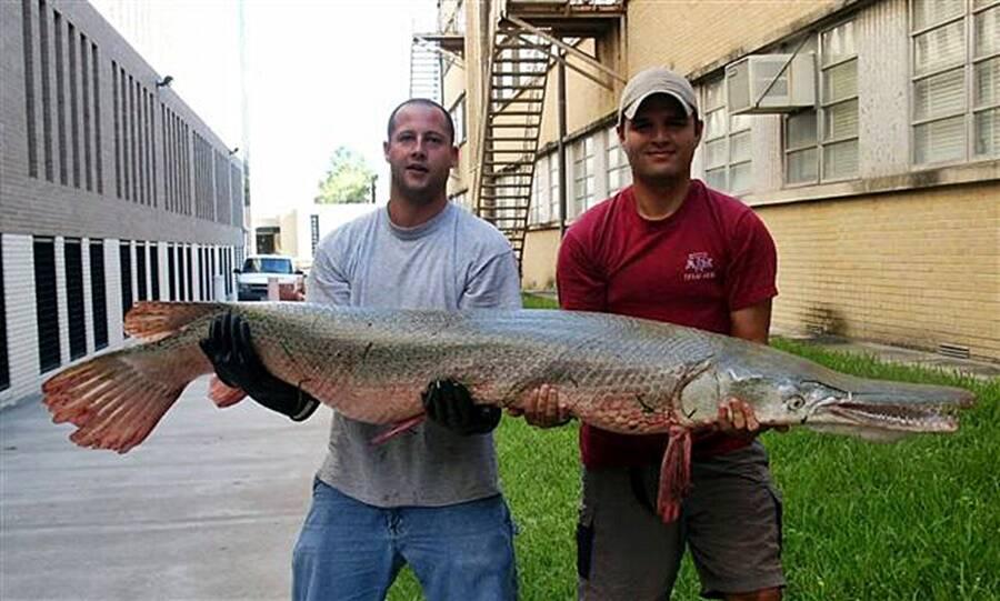 Sport Fishers With Alligator Gar