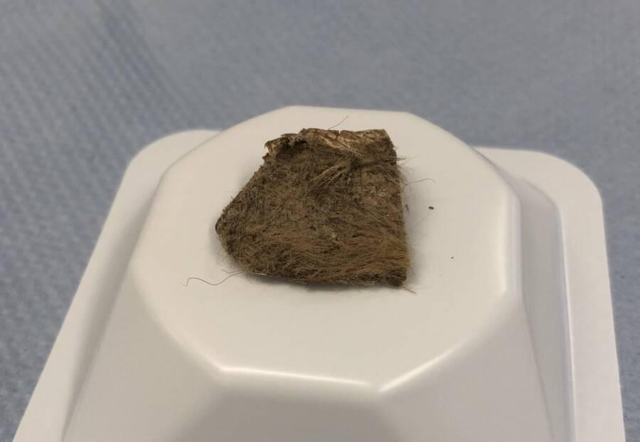 Tissue Of Woolly Rhino