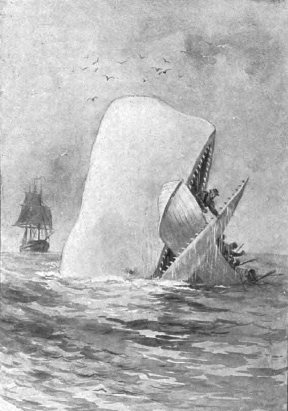 Whale Attacking Ship
