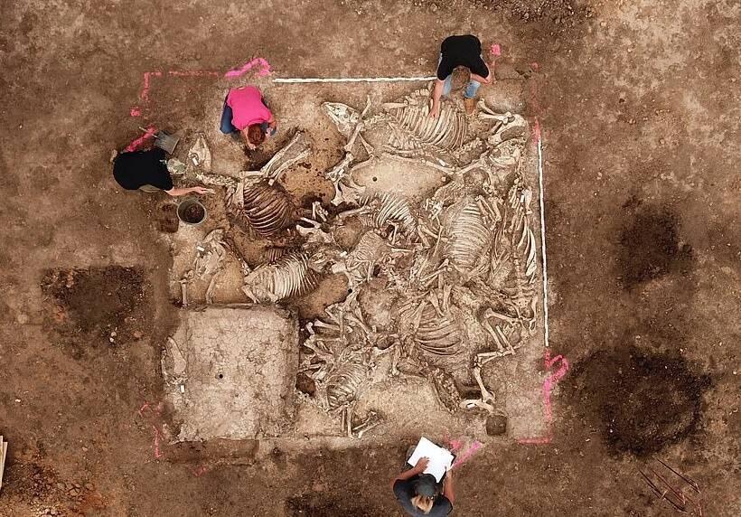 Animal Remains Inside Grave