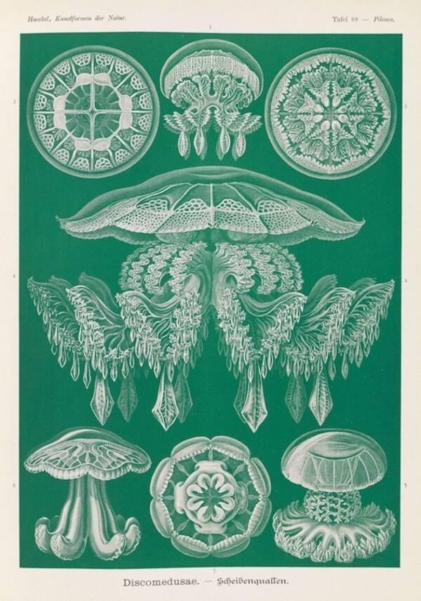 Ernst Haeckel Art