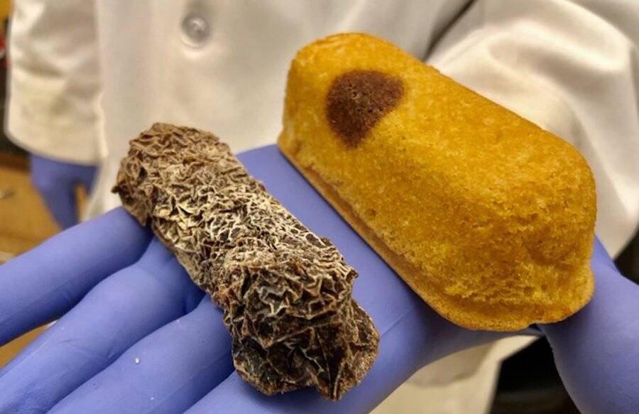 Mummified Twinkie And Marred Twinkie