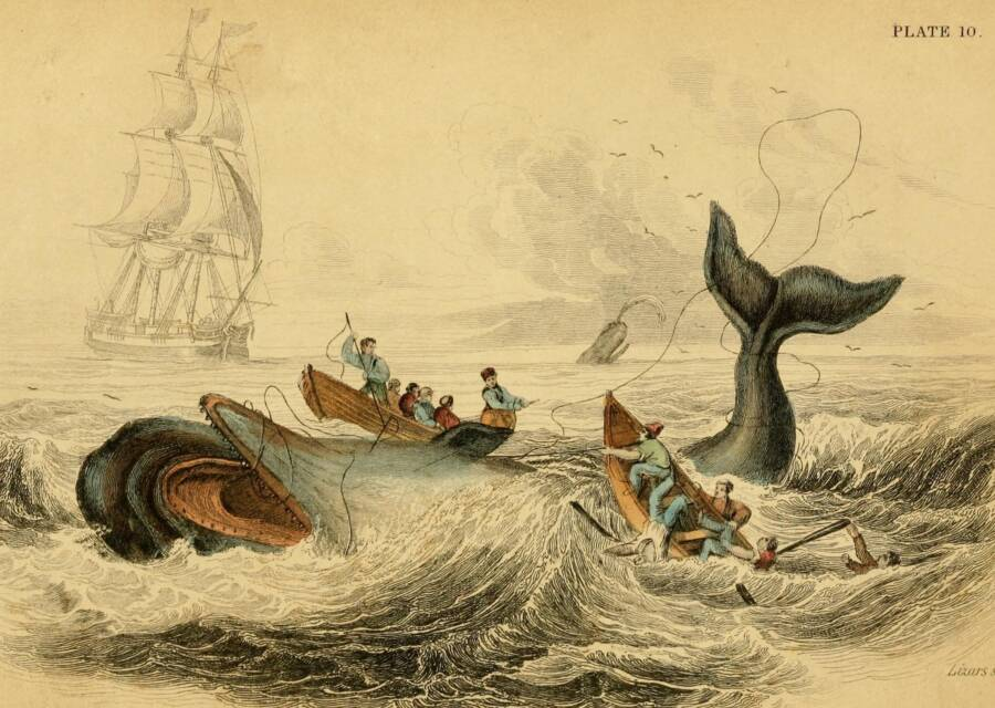 Whalers Harpooning A Whale