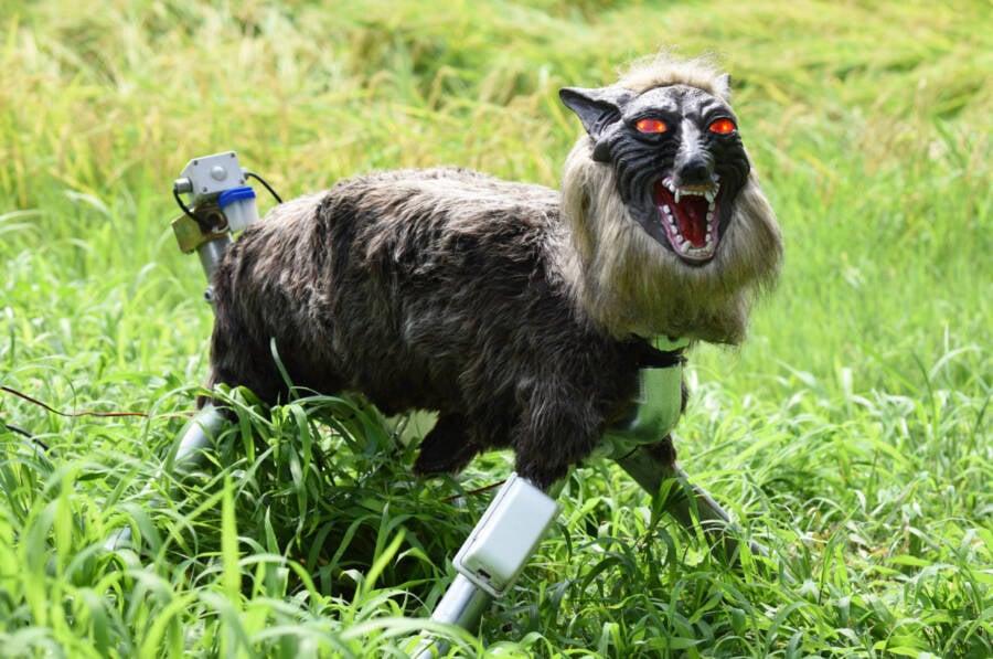 Japanese Robot Wolf