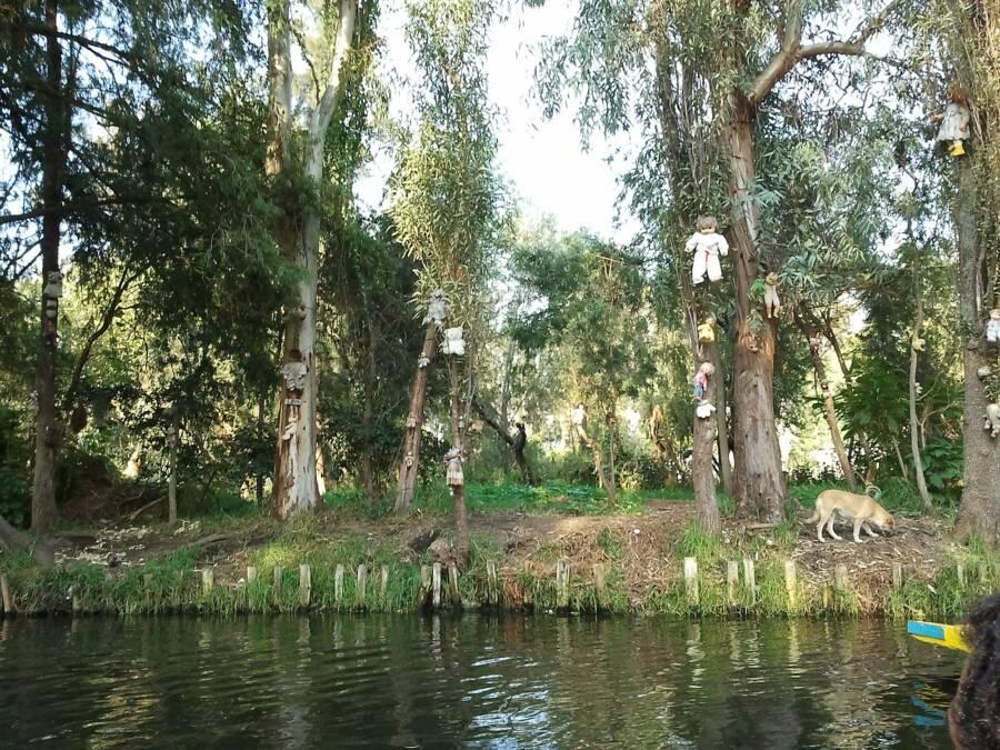 La Isla De Las Muñecas Canal