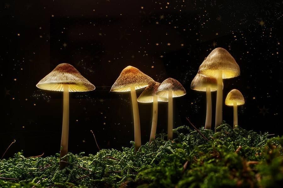 Magic Mushrooms Patch