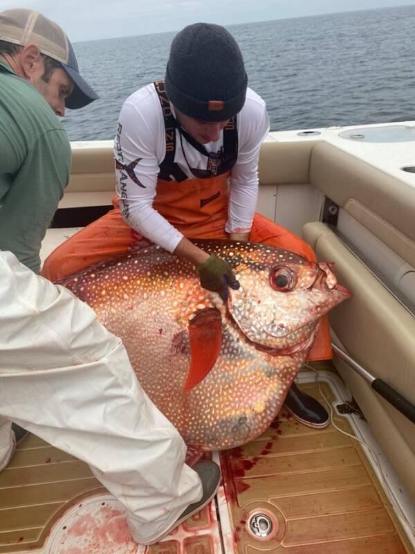 Opah Fish On Boat