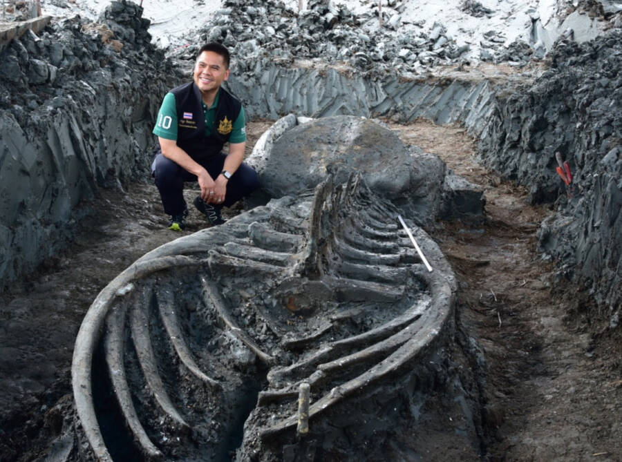 Ancient Whale Carcass